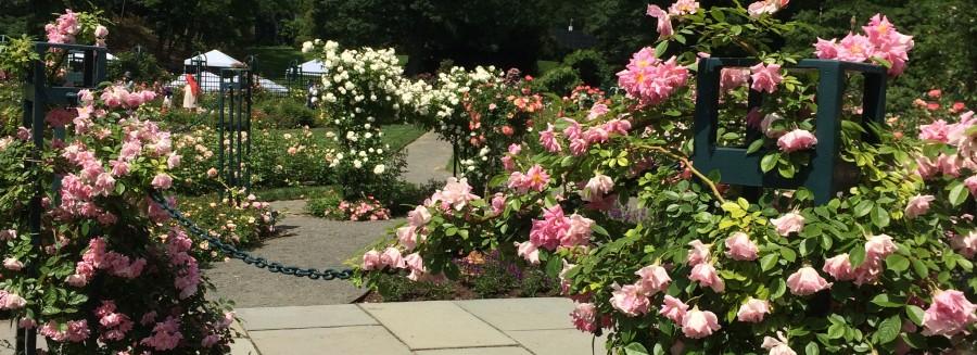 Rose Garden walkway